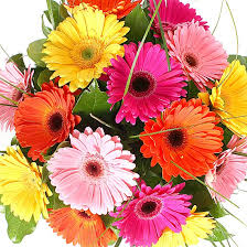 gerbera bouquet delivered next day