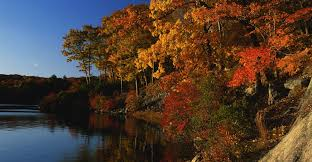 maple trees along lake in autumn new york pictures new york