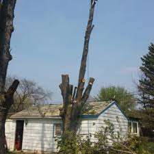 discount tree service tree services 6945 springport rd