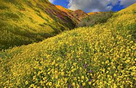 curtains meadow mountains wonderful yellow fields