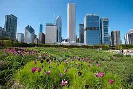 chicago gardens choose chicago