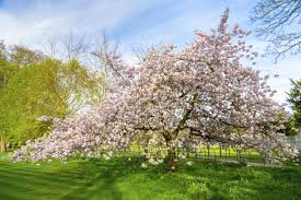 plants native to arkansas southern magnolia tree care