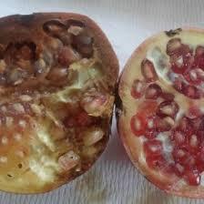 resultat cap cuisine 2012 messaoud mars phd of sousse sousse istls