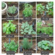 awesome ideas herb garden plants brilliant decoration easy indoor