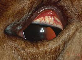 What Causes Eye Blindness A Guide To Loving And Caring For Blind Horses