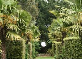 take an insider look at the essentials of garden design the