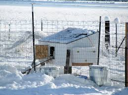 tips for keeping your chickens warm and alive in the winter