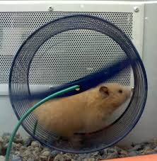 Hamster Cages Petsmart Choosing Hamster Cages