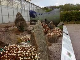 irish native plants conserving welsh plants national botanic garden of wales