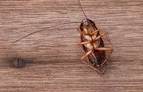 Common Bathroom Bugs Natural Ways To Get Rid Of Insects In Your Home Mnn Mother