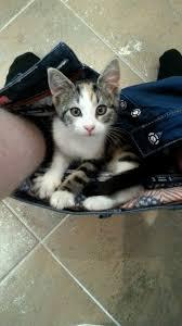 my kitten has always loved his vizsla pillow rebrn com