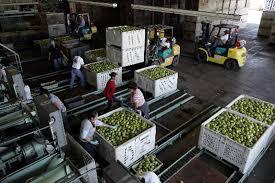 agricultural journalism jobs ukiah thomas pear facilities taken by ukiah bank