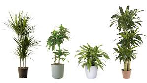 indoor plant 15 indoor air purifying plants for your apartment or home 6sqft