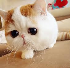 Sad Cat Meme - snoopybabe the cutest sad cat ever neatorama