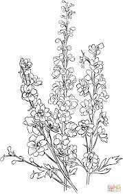 delphinium coloring page free printable coloring pages