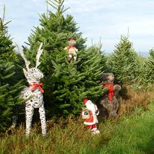 buying a christmas tree is an experience for all the family at