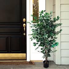 amazon com pure garden ficus tree 5 feet home u0026 kitchen