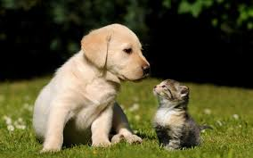 Wallpaper Dog Free Dog And Cat Images Long Wallpapers