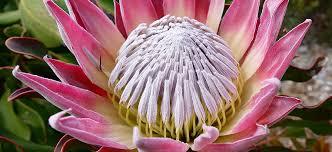 flower power garden centres