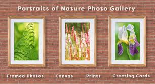 framed greeting cards photography gallery online store canvas framed photos prints