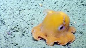 the dumbo octopus thinglink
