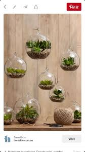 homelife 10 best plants for vertical gardens 87 best air plants images on pinterest air plants indoor plants