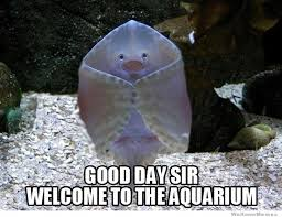 Stingray Meme - welcoming stingray weknowmemes