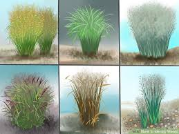 how to identify weeds 13 steps with pictures wikihow