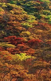 falls woodland type trees baobab mopane marula