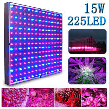 kaleep led grow light for red blue indoor garden greenhouse and