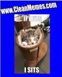 Clean Cat Memes - clean cat steps to follow while cleaning the cats ears most