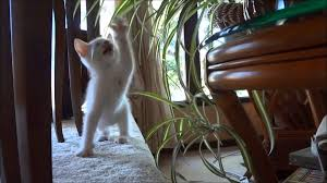 julio shows how to prune a spider plant youtube