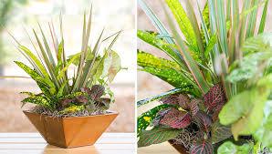 indoor plant arrangements indoor plant arrangements design decoration