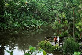 Botanical Gardens In Singapore by Sunday Outing Head For
