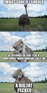 Not Sure If Meme Maker - bad pun ostrich meme generator imgflip