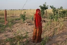thar desert the women of the thar desert u2013 rajasthan the agarwal foundation