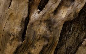 old tree wood bark free wallpaper hd