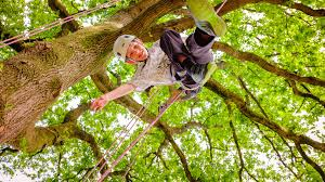 why tree climbing is a comeback kew