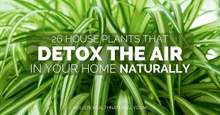houseplants 26 house plants that detox the air in your home naturally