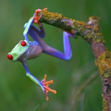 46 best 3d frog ideas images on