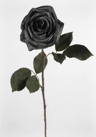 Rose Bouquet Fuchsia 9in Wishing Signs Slide U003d2