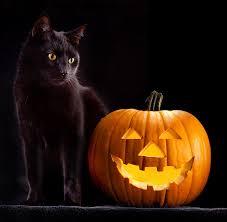 martini pumpkin carving pumpkin carving photographs fine art america