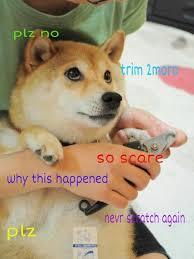 Doge Meme Best - favorite doge meme funny thread smogon forums