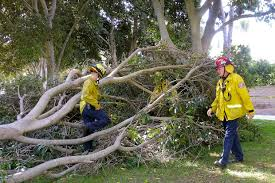 4 croquet are injured after tree falls on them in