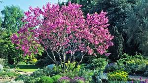 joe the best blossom trees for a small garden weekend the