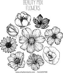 Flower Drawings Black And White - mix flowers drawing vector illustration and clip art cherry