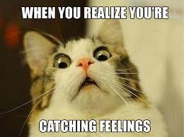 Catching Feelings Meme - 14 pets trying so hard not to catch feelings cuteness