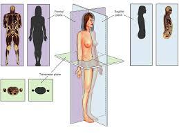 Human Anatomy Planes Of The Body Language Of Anatomy