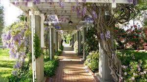 English Garden Pergola by What Are The Great Supports For Vines Hardwood Arbors Or Pergolas