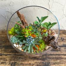 succulent terrarium in glass slant cut bowl u2013 urban jungle